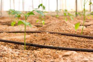 goteros para riego en cultivos