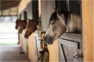 Pavimentos para caballos dependiendo de la estancia