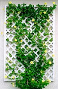 Celosias decorativas para jardin