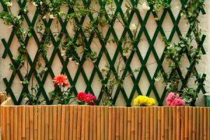 Celosias para decorar el jardín